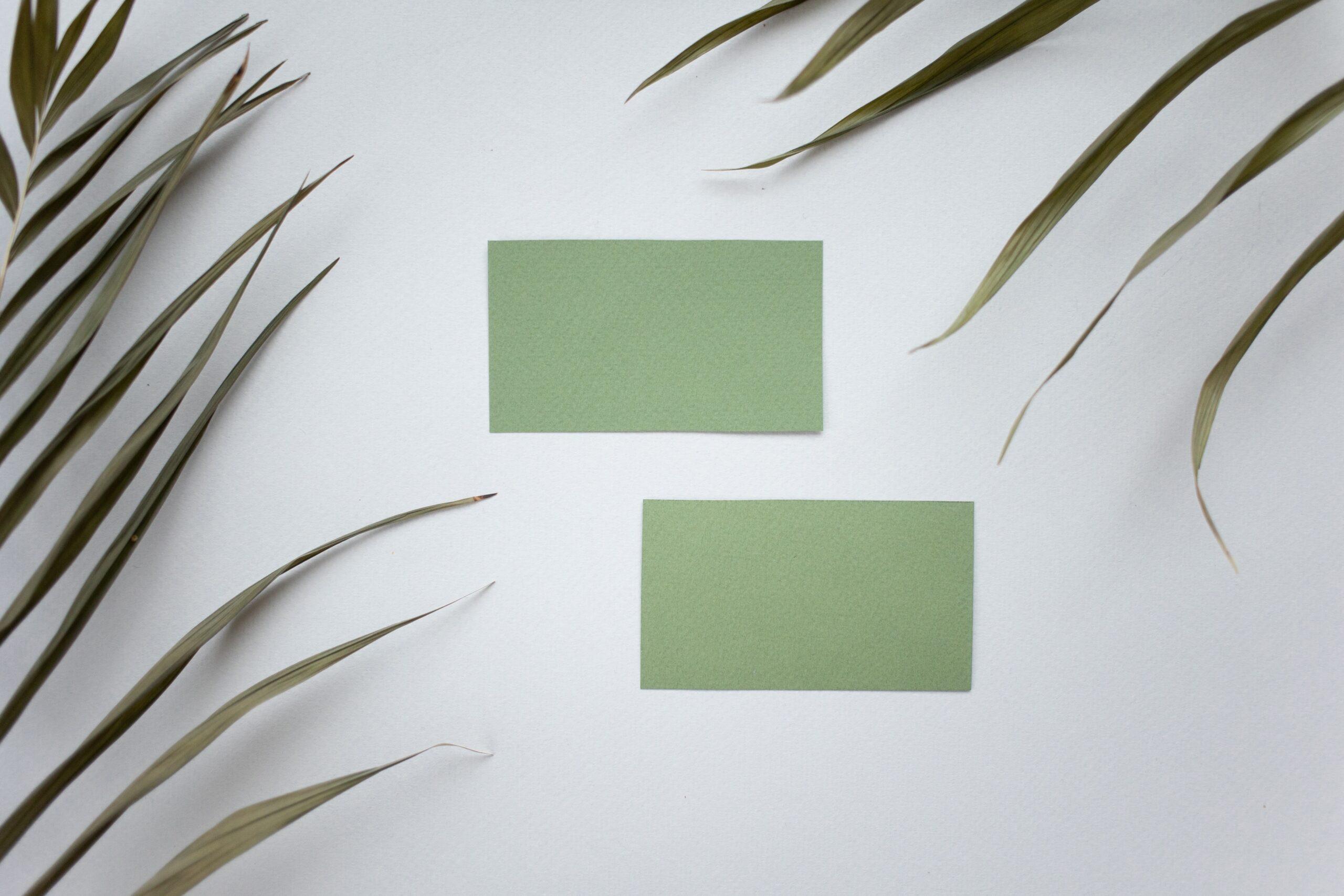 Ruhiges Foto mit Farn und grünen Quadraten vor einer weißen Wand